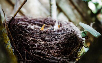 La fase del nido vuoto: un'occasione anche per la coppia matura
